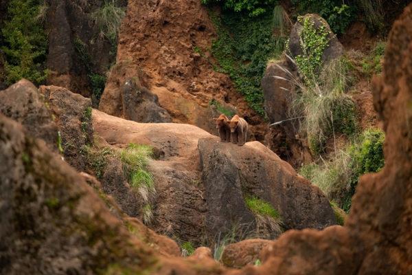 Osos en el Parque de la Naturaleza de Cabárceno
